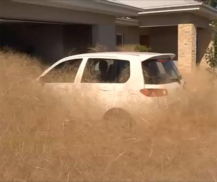 Dozens Of Homes Overrun With Tumbleweeds In Wangaratta, Australia