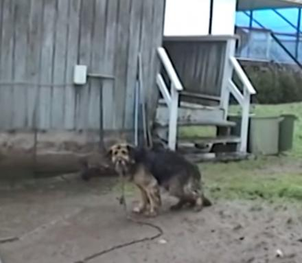 This Dog Was Chained Up For 10 Years, Watch Her Amazing Recovery After She Gets Rescued