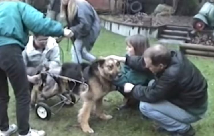 Dog Chained Up For 10 Years Gets Rescued