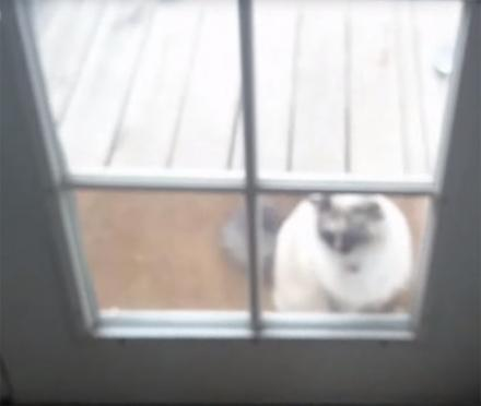 You Won't Believe What This Guy Does To His Neighbor's Cat